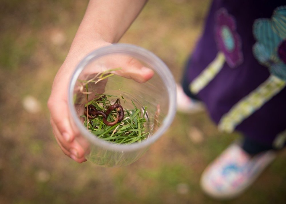Vermicomposting: How I Learned to Love My Worms - Outdoor Families Magazine
