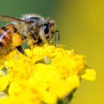 Creating A Pollinator Garden: This spring give bees a helping hand