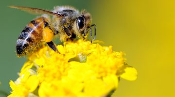 bee pollinator garden tips and tricks