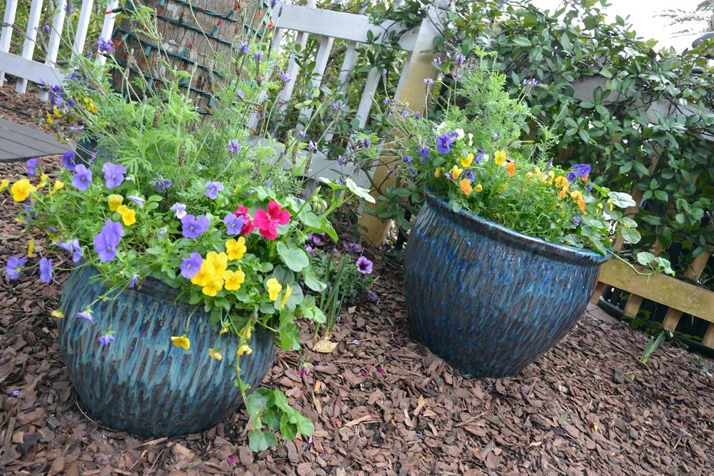 Little Green Thumbs: Container gardening with kids Outdoor Families Magazine