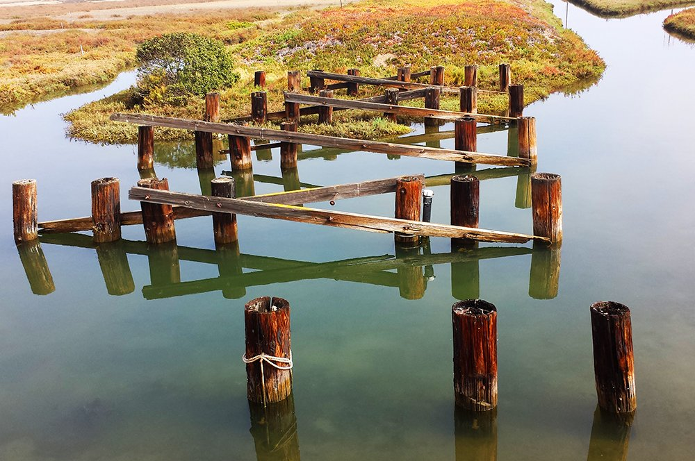 The Ballona Wetlands in Los Angeles County [image Kerem Hanci Photography]