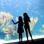 Bermuda Aquarium museum and zoo