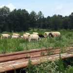 Cultivating the 318 - North Louisiana's Mahaffey Farms - Outdoor Families Magazine
