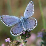 10 Ways to Support Threatened & Endangered Species in Your Garden