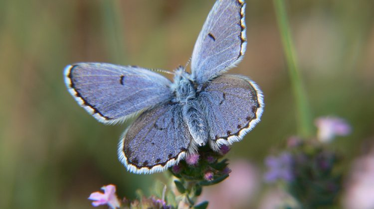 10 Ways to Support Threatened & Endangered Species in Your Garden