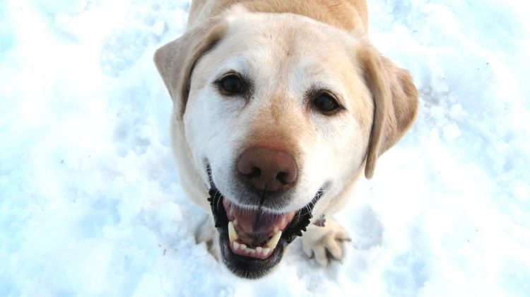 4 Expert Tips on Raising an Adventure Dog