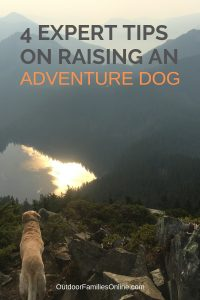 Advice from adventure dog owner John Soltys who has dedicated his life to getting dogs adventuring safely. Read 4 expert tips on raising an adventure dog.