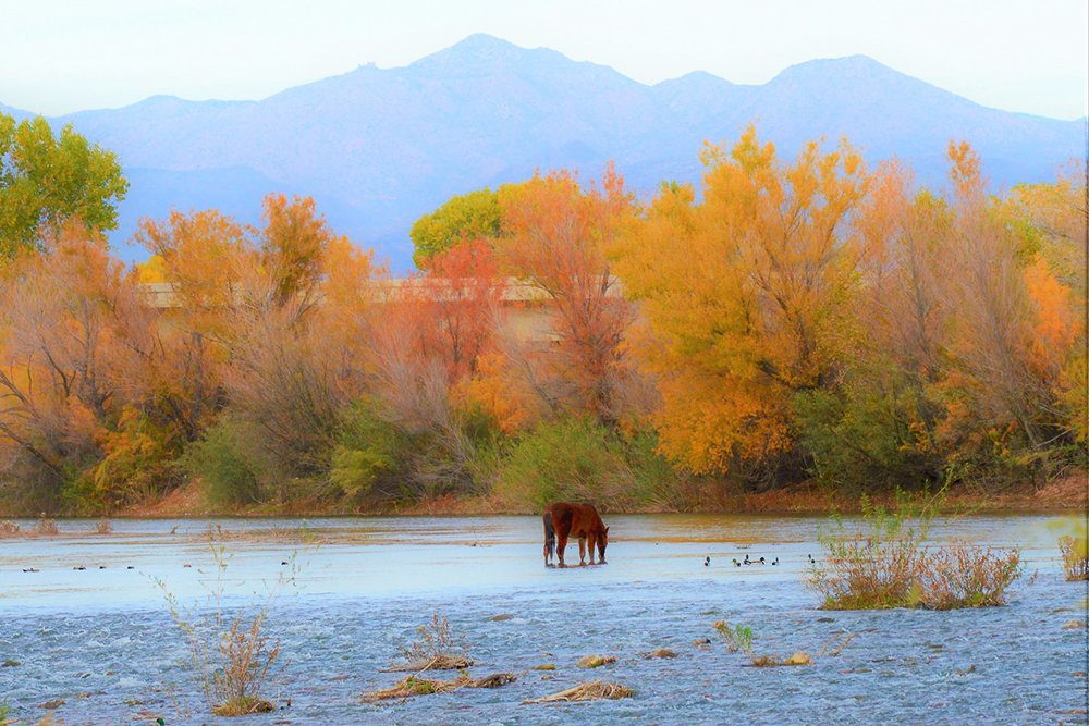 salt river horses salt river canyon arizona