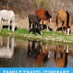WILD HORSES IN SALT RIVER, ARIZONA