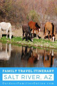 WILD HORSES IN SALT RIVER, ARIZONA