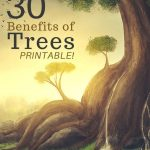 Why are trees important? As the biggest plants on the planet, they give us oxygen, store carbon, stabilize the soil, and give life to the world's wildlife. Here are 30 benefits of trees, plus a great printable to incorporate into homeschool, classroom, or outdoor learning curriculum.